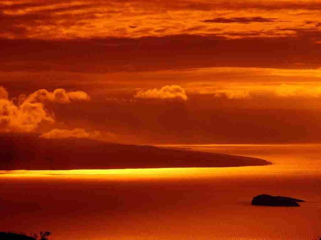 Apus colorat in Hawaii